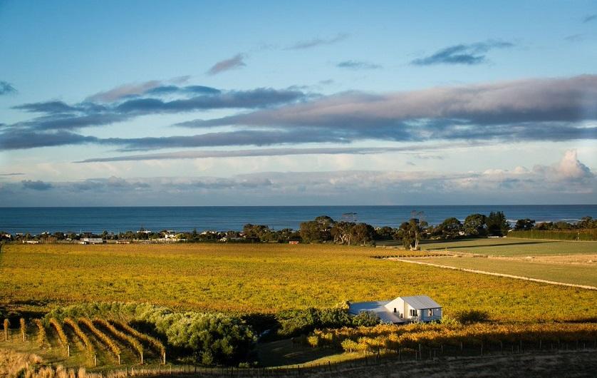 Chardonnay-Gebiet Hawkes Bay