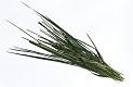 Weinaroma Lawson's Dry Hills Marlborough Sauvignon Blanc 2019: Gras