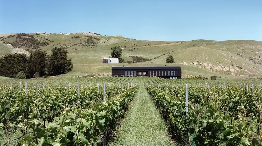 Home Vineyard, Black Estate