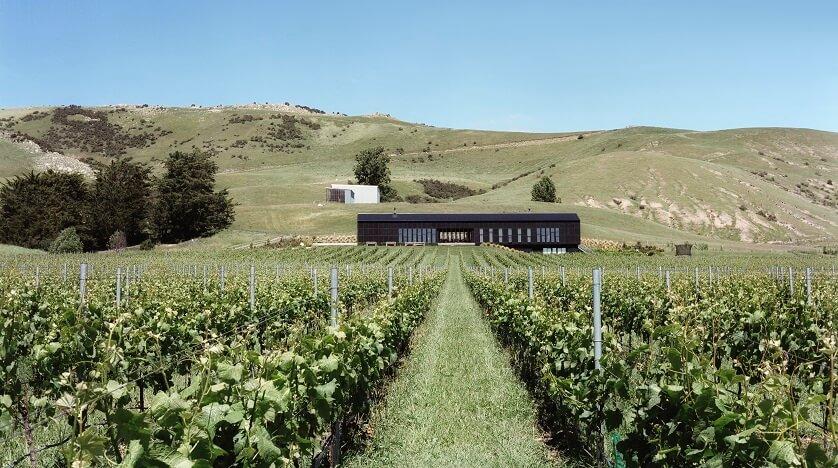 Home Vineyard, Black Estate