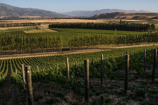 wines from Quartz Reef