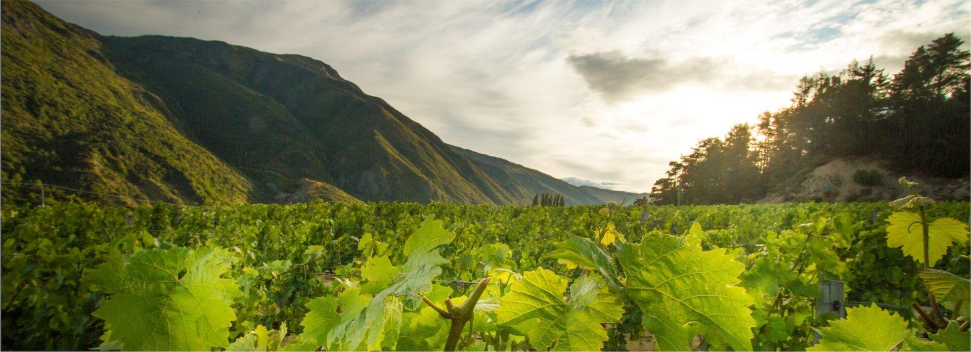 Central Otago Pinot Noir von Gibbston Valley